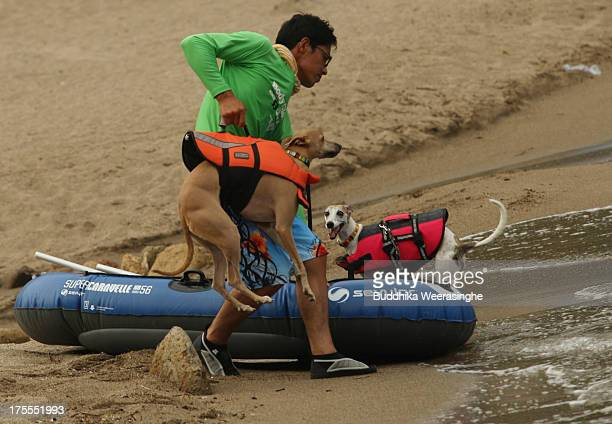 A man brings his dog Rodem for a swim at Takeno Beach on August 4 2013 in Toyooka Japan This beach is open for dogs and their owners every summer...