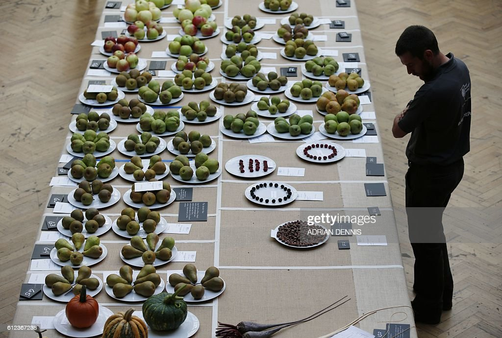 A man browses the different types of apples on display at the Royal Horticultural Society (RHS) Harvest Festival show in London on October 4, 2016. / AFP / ADRIAN