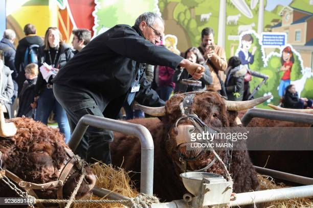 A man brushes a cow during the 55th International Agriculture Fair at the Porte de Versailles exhibition center in Paris on February 24 2018 / AFP...