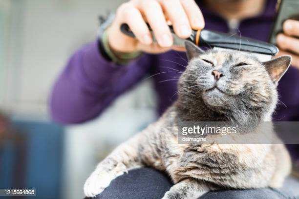 man brushing with comb domestic cat - groom stock pictures, royalty-free photos & images