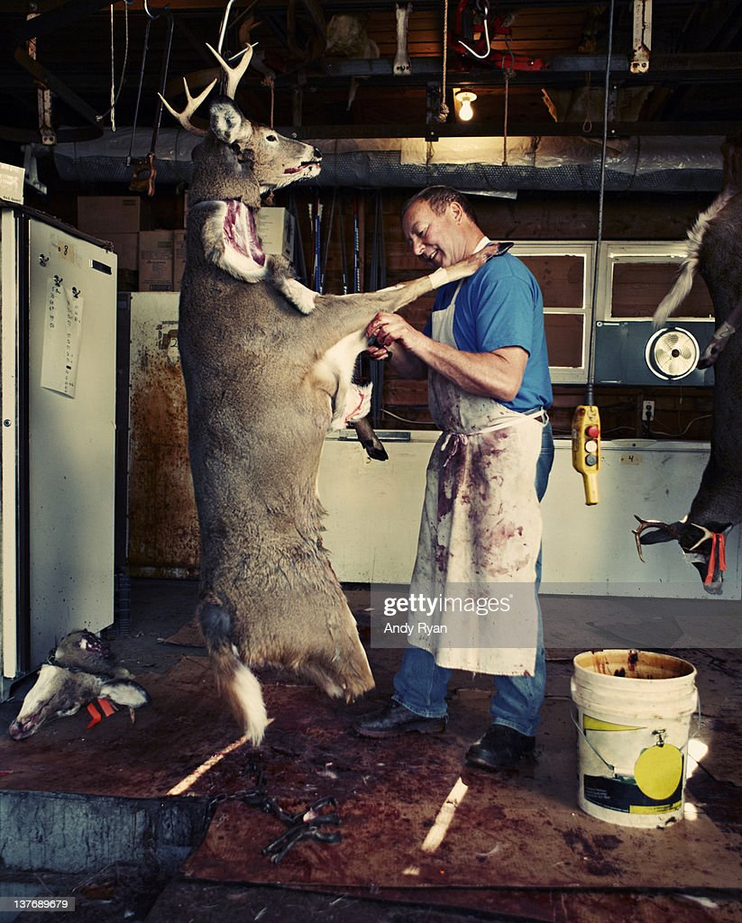 Man butchering deer in garage. : ストックフォト