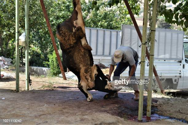 A man butchers a sacrificial animal on the first day of Eid alAdha in southern Kahramanmaras province of Turkey on August 21 2018