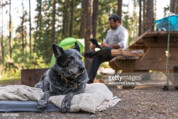 Man camps with tent and dog, mountains
