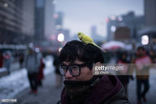 TOPSHOT A man carries a bird on his head during an antigovernment protest in Seoul on January 21 2017 Tens of thousands of protestors braved icy...