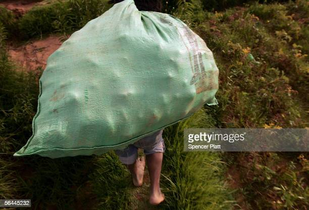 A man carries a sack of potatoes to a truck December 16 2005 in Cliza Bolivia Rural Indian workers a long exploited and crucial sector of Bolivian...