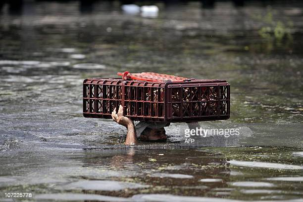Man carries his chicken on his head at a flooded farm in Palmira, department of Valle del Cauca, Colombia, on November 30 after the Frayle river...