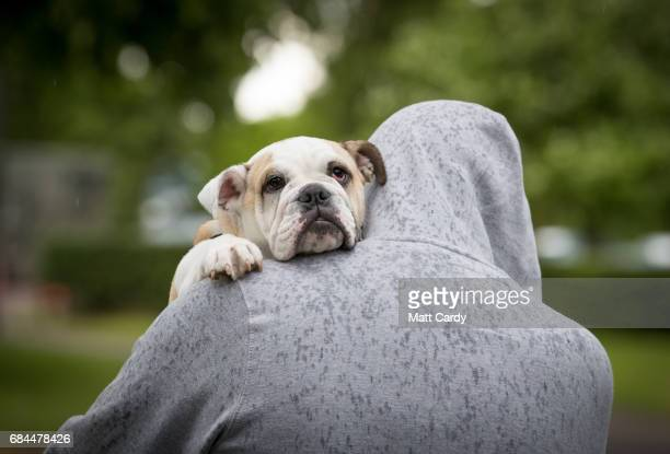 A man carries his dog home in the rain at end of the first day of the 122nd Devon County Show at the Westpoint Arena and Showground in Clyst St Mary...