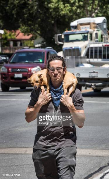 Man carries his dog on his shoulders during the 90 degree heat on July 4 in Solvang, California. Despite the on-going pandemic and lack of a parade...