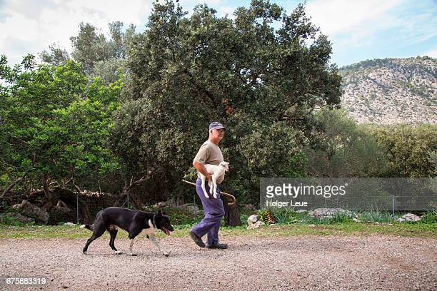 Man carries one day-old lamb and a sheep dog
