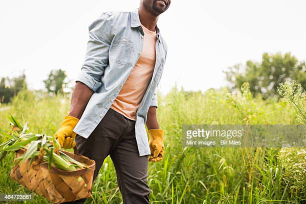 a man carrying a basket full of fresh picked organic vegetables,working on an organic farm. - farm to table stock photos and pictures