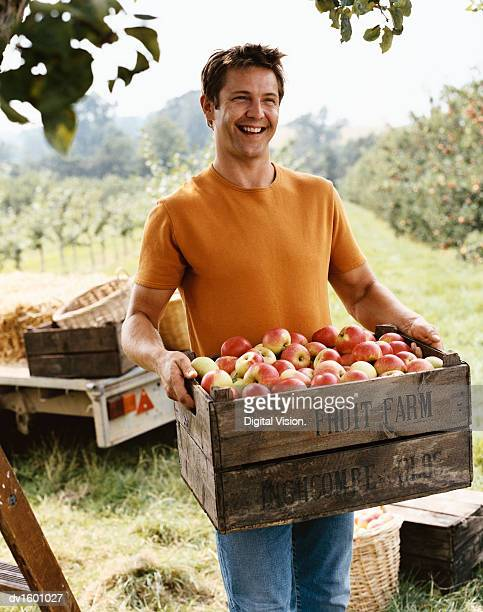 man carrying a crate of apples in an orchard - apple fruit stock pictures, royalty-free photos & images