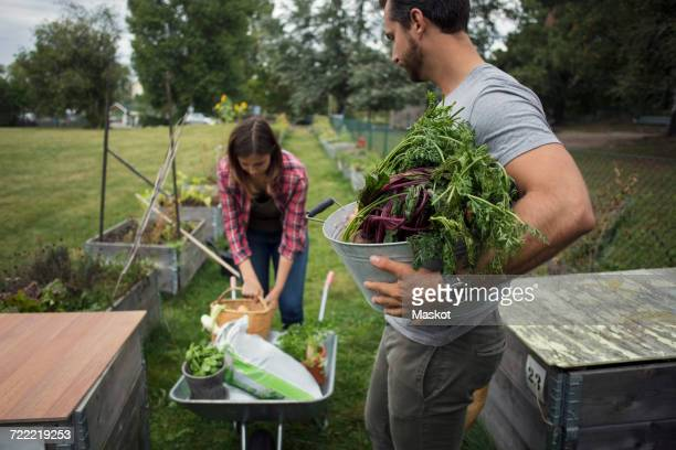 Man carrying bucket full of vegetables looking at woman working at urban garden