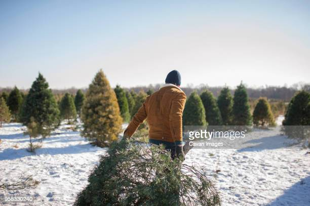 man carrying christmas tree on snow covered farm against sky - christmas tree farm stock pictures, royalty-free photos & images