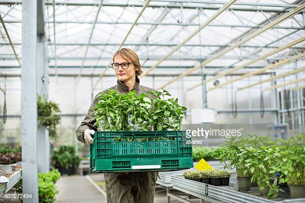 Man carrying crate full of plants in greenhouse