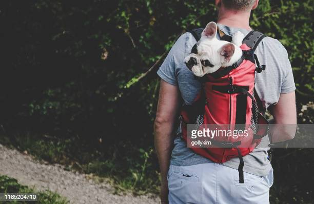 man carrying dog in backpack pet carrier on a hiking trip - carrying stock pictures, royalty-free photos & images
