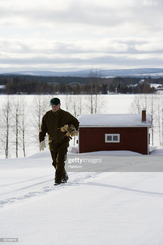 A man carrying firewood Lapland Sweden. : Stock Photo