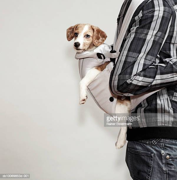 Man carrying Jack Russel dog in baby sling, mid section
