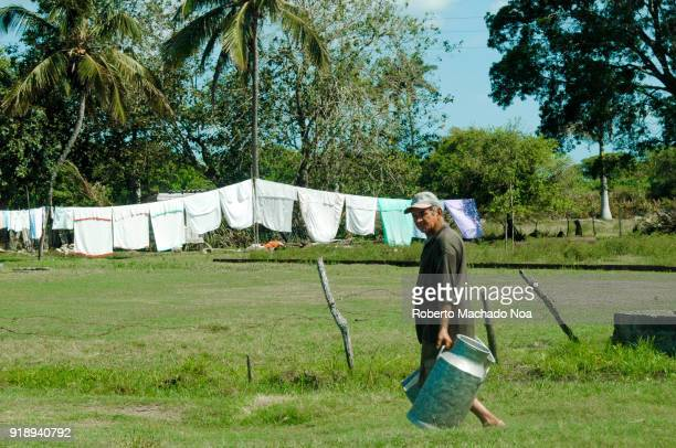 A man carrying large milk containers In Cuba farmers are bound by law to sell their milk production to the government The government later distribute...