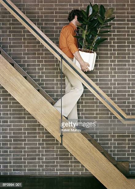 Man carrying pot plant down stairs, face obscured by leaves, profile