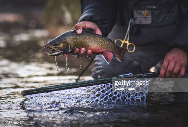 a man catches a brook trout during a cold morning in maine - trout stock pictures, royalty-free photos & images