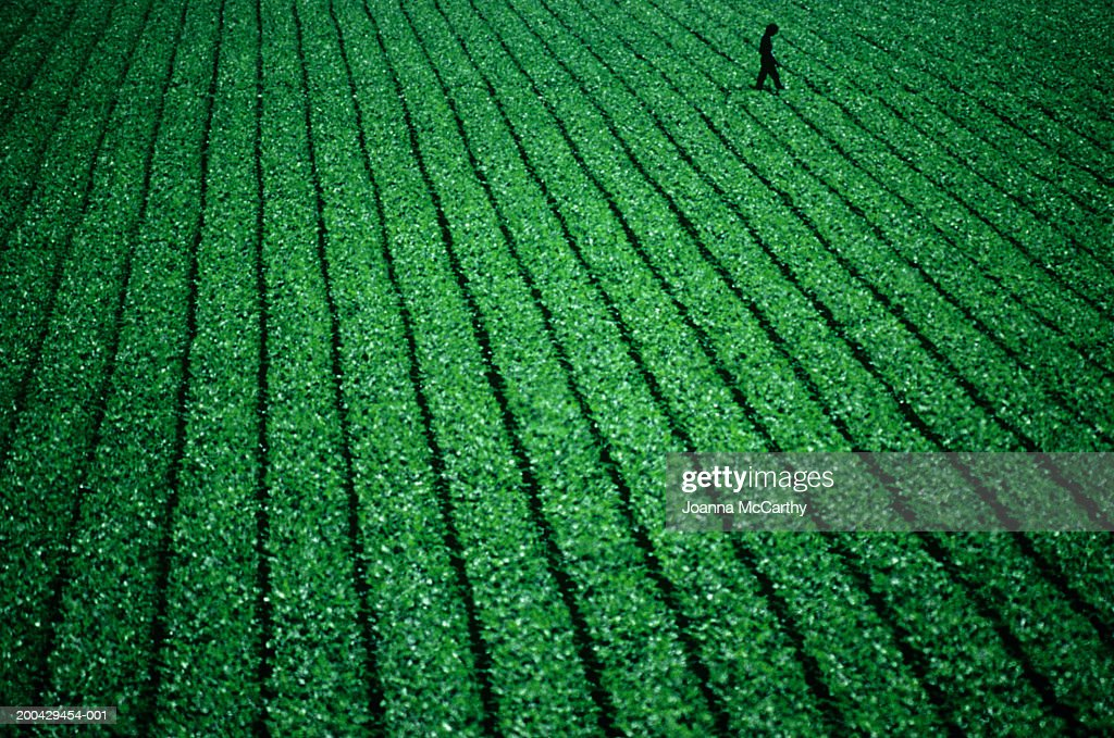 Man checking crops : Stock Photo