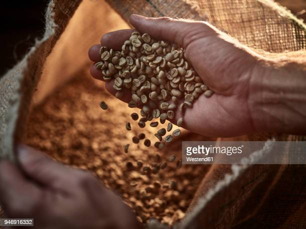 man checking green coffee, close-up - coffee beans stock photos and pictures