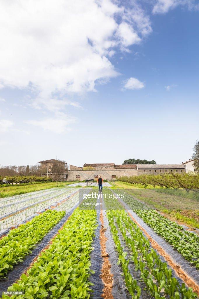 Mann überprüfen Gemüsegarten : Stock-Foto