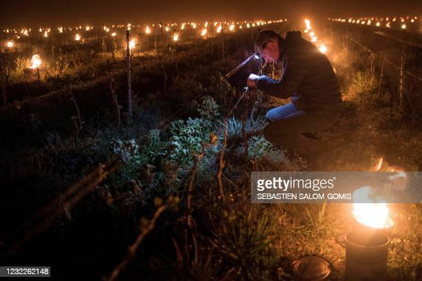 Man checks the vine buds during the burning of anti-frost candles in the Luneau-Papin wine estate vineyard in Le Landreau, near Nantes, western...