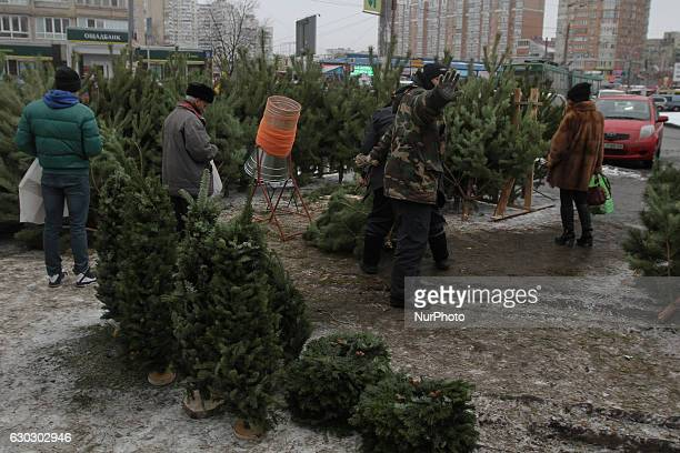 Man choses a fir tree at a vendor market in Kyiv, Ukraine, Dec 19, 2016. Street Christmas trees markets were opened in Kyiv, Ukraine as country meets...