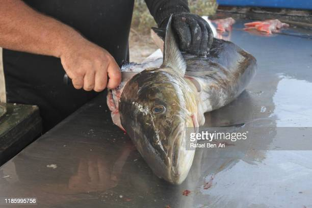 man cleaning a large fish - rafael ben ari stock pictures, royalty-free photos & images