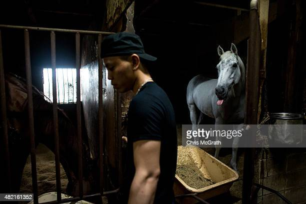 A man cleans out a horse stable during preparations for the Soma Nomaoi festival on July 24 2015 in Minamisoma Japan Every summer the people of...