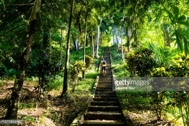 a man climbing the stairs to pirate's bay beach, charlotteville, tobago, trinidad and tobago, west indies, south america - paisajes de trinidad tobago fotografías e imágenes de stock