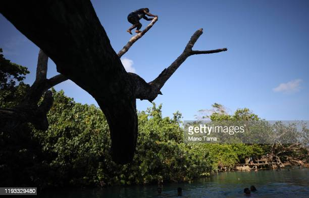 A man climbs a tree before diving in at the Blue Lagoon on November 30 2019 in Efate Vanuatu Satellite data show sea level has risen about 6mm per...