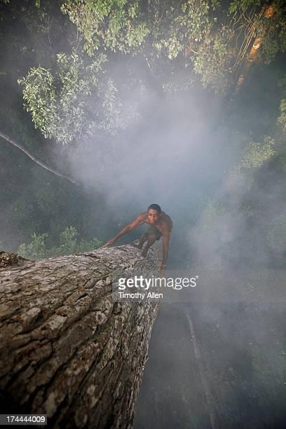 Man climbs tree through smoke using a liana rope