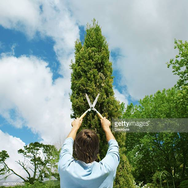 Man clipping a hedge
