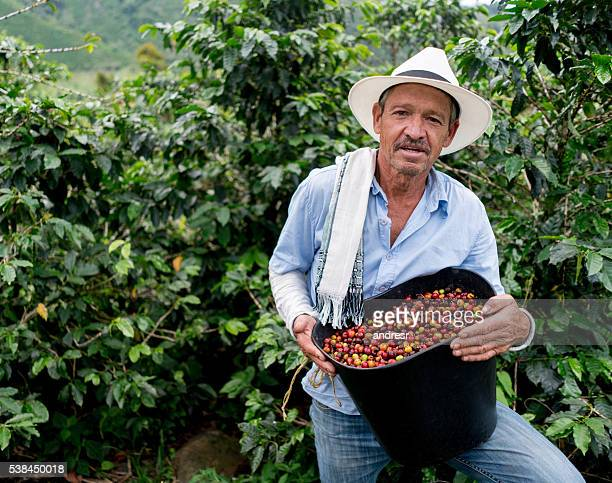 man collecting coffee beans at a farm - südamerika stock-fotos und bilder