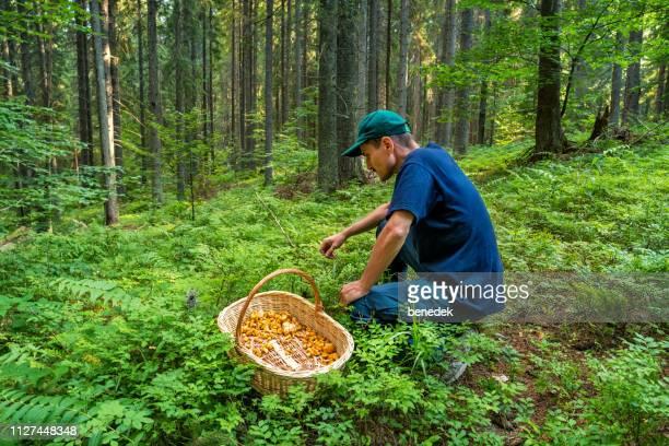 man verzamelen paddestoelen in het bos - foerageren stockfoto's en -beelden