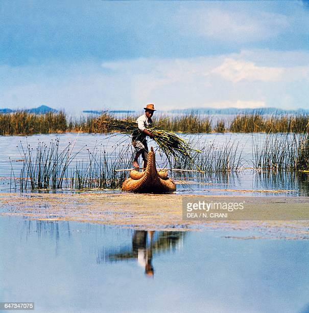 Man collecting reeds in a balsa wood boat Peru
