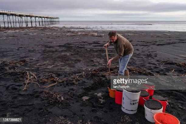 A man collects sea coal deposited on Saltburn beach on November 24 2020 in Saltburn By The Sea England Sea coal washes up onto beaches either...