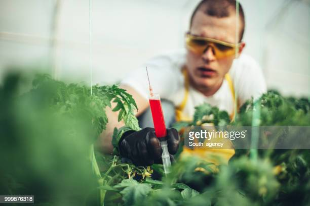 Man conducts experiments in a greenhouse