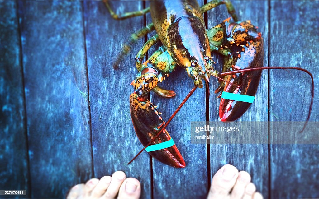 man confronting lobster : Stock Photo