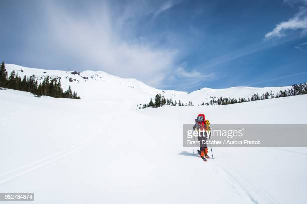 man cross country skiing towards mt shasta, california, usa - mt shasta stock pictures, royalty-free photos & images