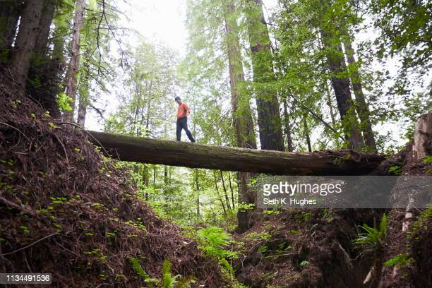 man crossing fallen tree trunk, humboldt redwoods state park, california, usa - humboldt redwoods state park stock photos and pictures