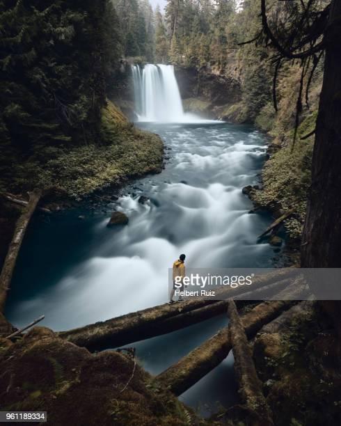 man crossing river, koosah falls, willamette, oregon, usa - willamette river stock photos and pictures