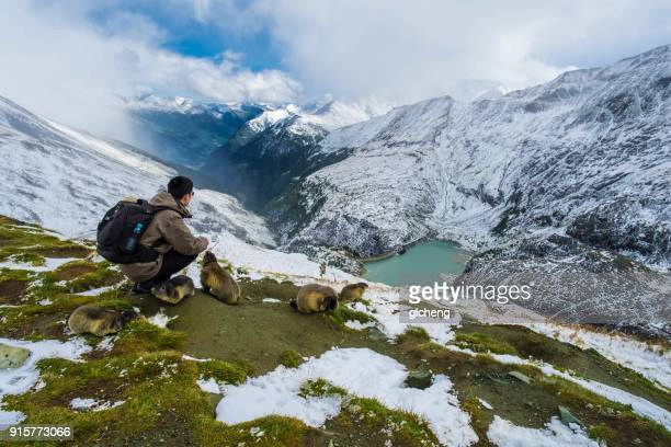 man crouching next to groundhogs looking at view, austria - woodchuck stock pictures, royalty-free photos & images