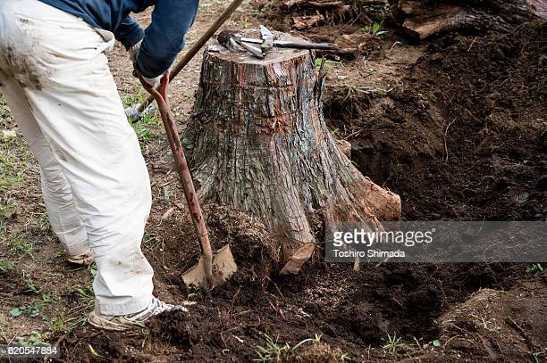 A man cutting a tree's root