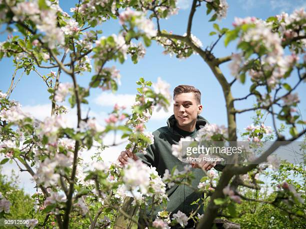 Man Cutting Apple Blossom In Orchard