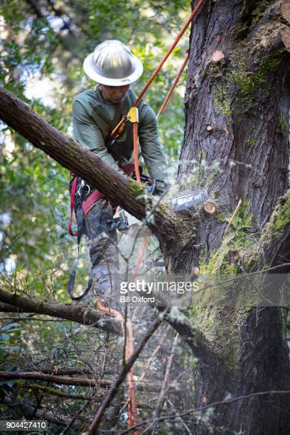 Man Cutting Branches on Tree