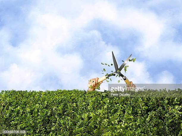 man cutting hedge with trimmings flying (only arms visible) - cutting stock pictures, royalty-free photos & images