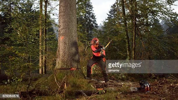 Homme coupe un arbre dans la forêt